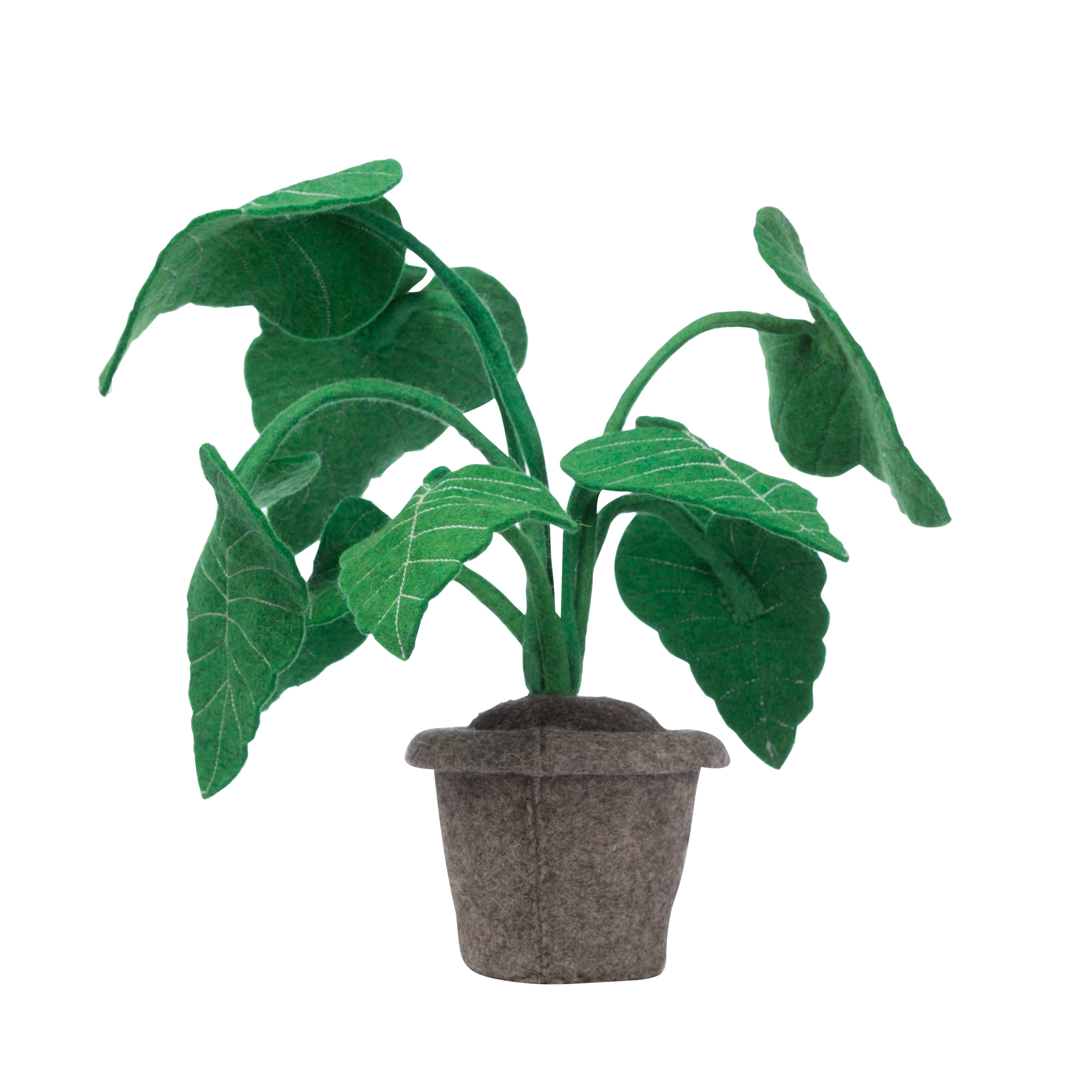Plant KidsDepot Alocasia